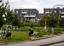 Un jardin éphémère au pied de nos résidences à Vannes !